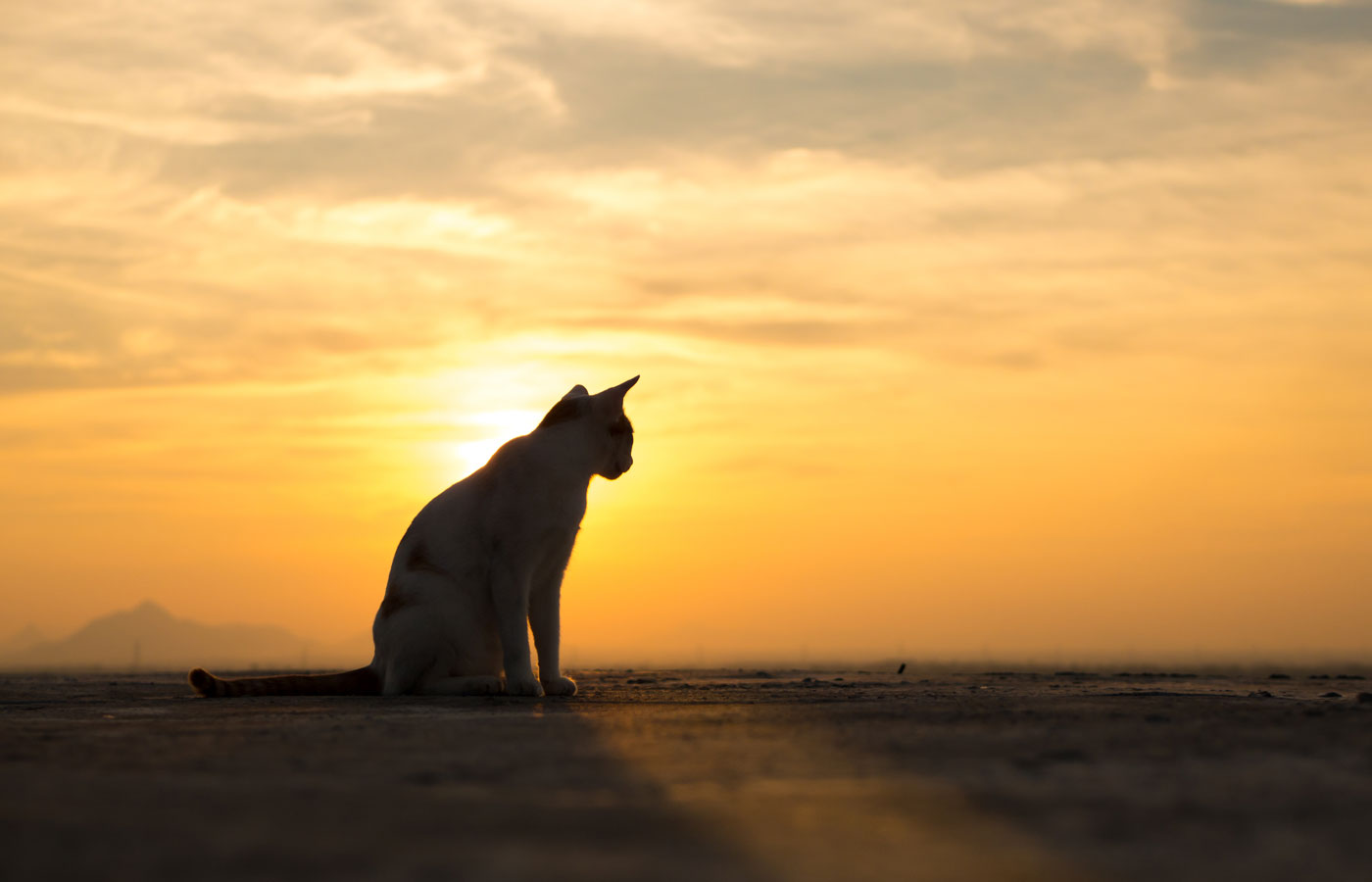 Cute cat on the roof,sunset background,cat looking